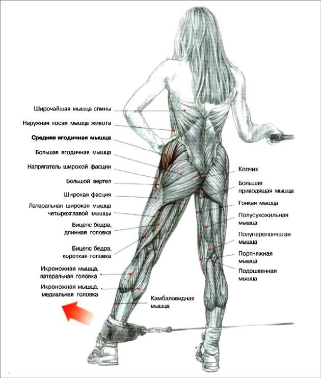 мышцы галифе ног в картинках герои зверополиса
